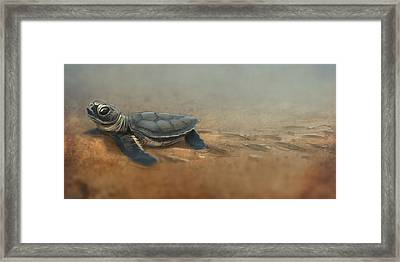 Baby Turtle Framed Print by Aaron Blaise