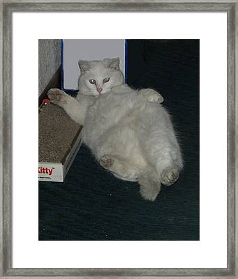 Baby Way Too Much Catnip Framed Print