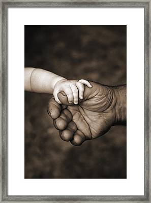 Babys Hand Holding On To Adult Hand Framed Print by Corey Hochachka