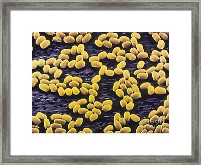 Bacillus Anthracis Framed Print by A. Barry Dowsett