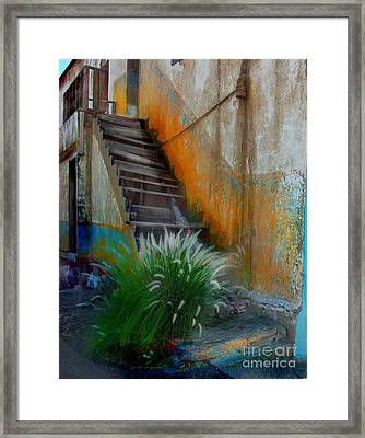 Back Entry Framed Print by CJ  Rider