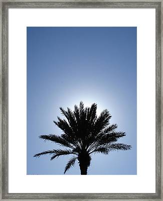 Back Light Palm Tree Framed Print by Michel Mata