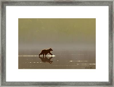 Back Lit Grizzly Framed Print by Aaron Blaise