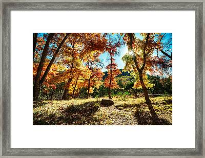 Backlit Wonderland - Lost Maples State Natural Area Texas Hill Country Framed Print by Silvio Ligutti