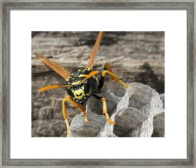 Back Off.  Framed Print