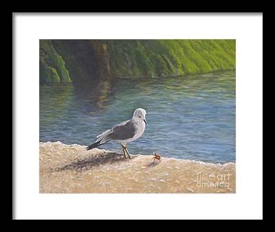 Gull Framed Prints