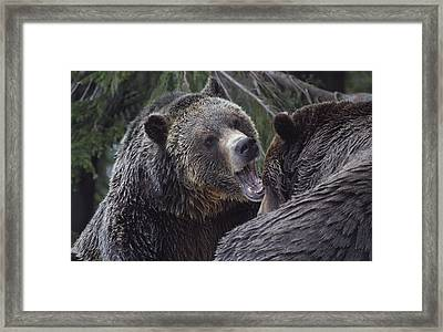 Back Off Framed Print