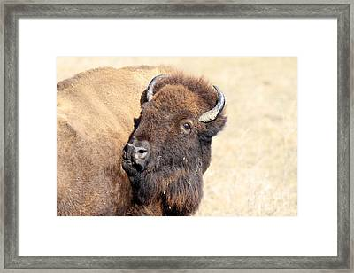 Back Off Framed Print by Rick Rauzi