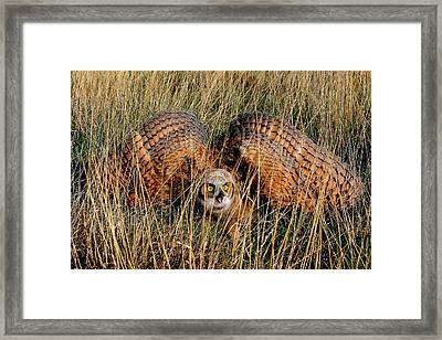 Framed Print featuring the photograph Back Off by Steven Reed