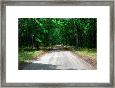 Back Roads Of South Carolina Framed Print