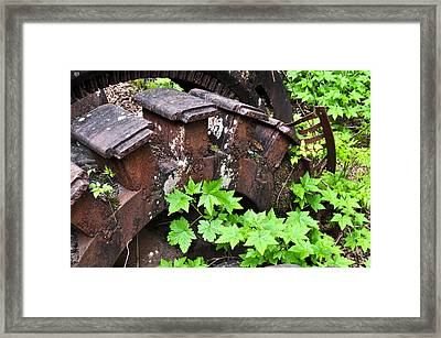 Framed Print featuring the photograph Back To The Forest by Cathy Mahnke
