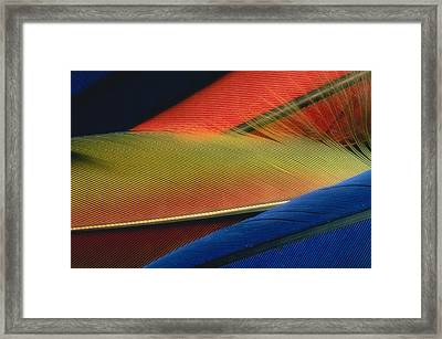 Background Framed Print by Panoramic Images