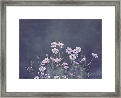 Backlight - Cosmos Flowers Framed Print by Kim Hojnacki
