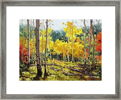 Backlit Aspen Grove  Framed Print