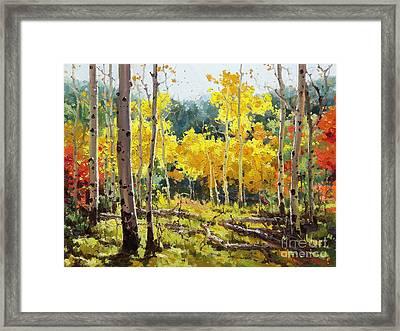 Backlit Aspen Grove  Framed Print by Gary Kim