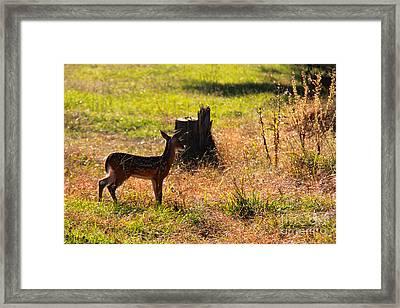Backlit Beauty Framed Print by Leslie Kirk