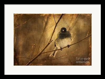 Gray And Black Beak Framed Prints