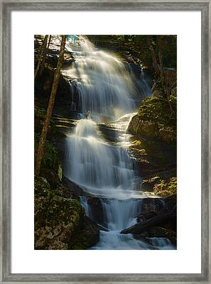 Backlit Buttermilk Framed Print by Mark Robert Rogers