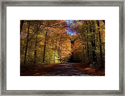 Backlit Canopy Framed Print