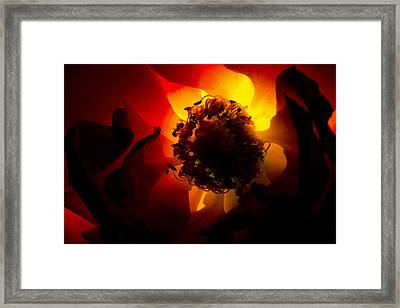 Backlit Flower Framed Print by Fabrizio Troiani