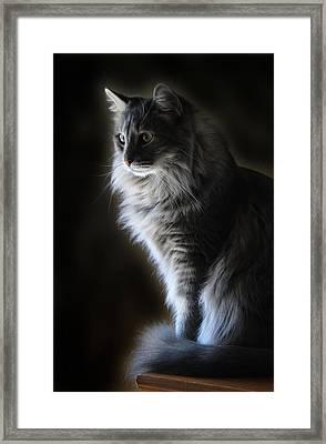 Backlit Kitty Framed Print by Carolyn Fletcher