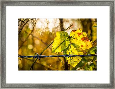 Framed Print featuring the photograph Backlit Leaf. by Gary Gillette
