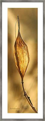 Backlit Leaf Framed Print by Terri Harper