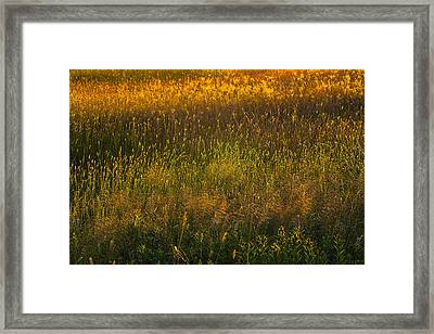 Framed Print featuring the photograph Backlit Meadow Grasses by Marty Saccone