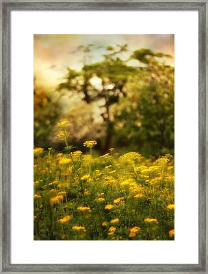 Backlit Meadow Framed Print by Jessica Jenney