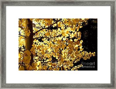 Backlit Framed Print