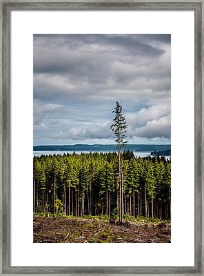 Logging Road Ocean View  Framed Print