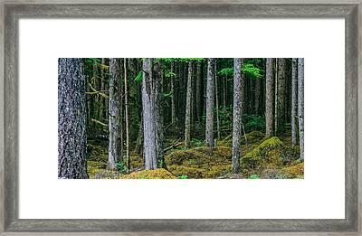 Inside View Backroad Forest Framed Print