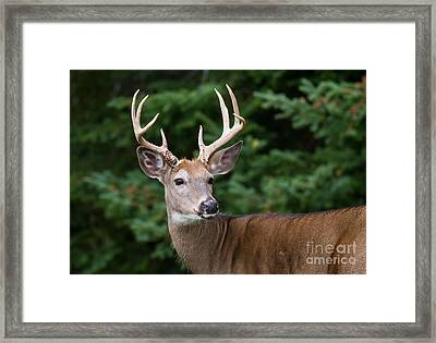 Backward Glance Framed Print