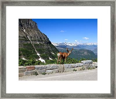 Backwards Glance Framed Print by Aaron Aldrich