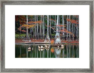 Backwaters Framed Print by Lana Trussell