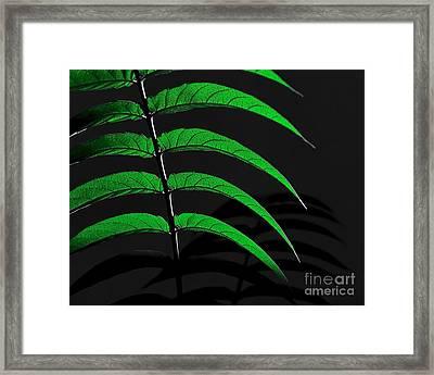 Backyard Abstract Framed Print