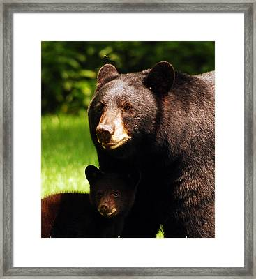 Backyard Bears Framed Print by Lori Tambakis