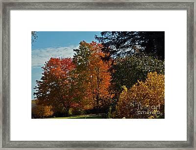 Backyard Beauty Framed Print by Judy Wolinsky