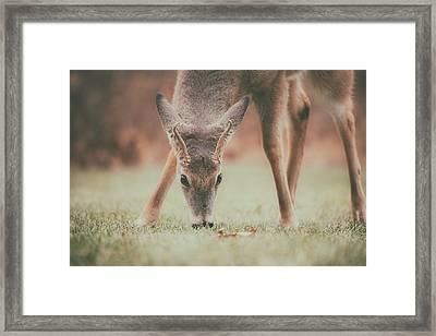 Backyard Beauty Framed Print