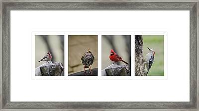 Backyard Bird Set Framed Print by Heather Applegate