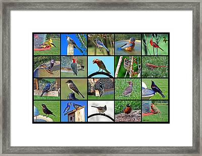 Backyard Birds Framed Print