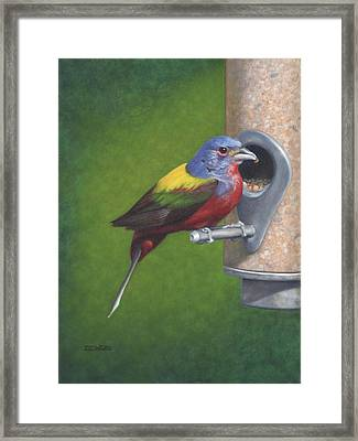 Backyard Bunting Framed Print by Dee Dee  Whittle