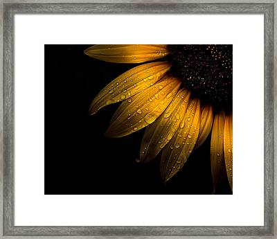Backyard Flowers 28 Sunflower Framed Print by Brian Carson