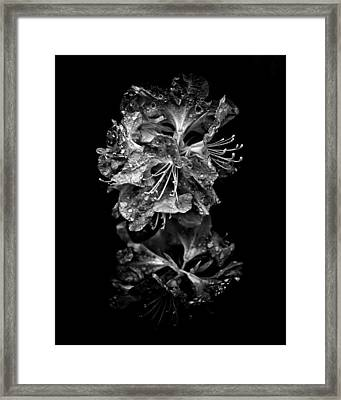 Backyard Flowers In Black And White 1 After The Storm Framed Print by Brian Carson