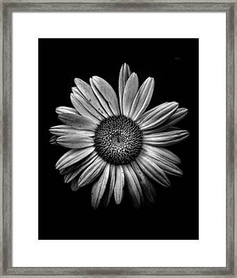 Backyard Flowers In Black And White 13 Framed Print by Brian Carson