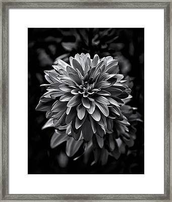 Backyard Flowers In Black And White 15 Framed Print by Brian Carson