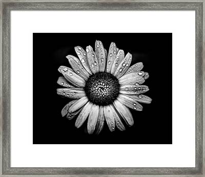 Backyard Flowers In Black And White 17 After The Storm Framed Print
