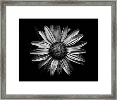 Backyard Flowers In Black And White 18 Framed Print