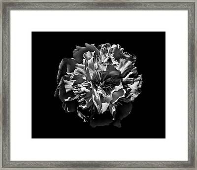 Backyard Flowers In Black And White 3 Framed Print by Brian Carson
