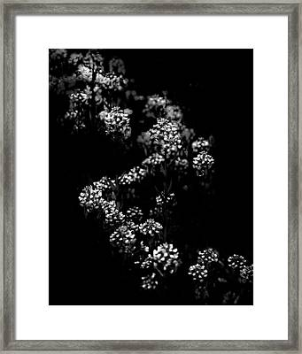 Backyard Flowers In Black And White 33 Framed Print by Brian Carson